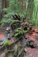 Redwoods10730 1 2