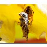 Garden Spider 8302