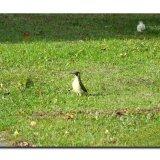 Green Woodpecker 3184