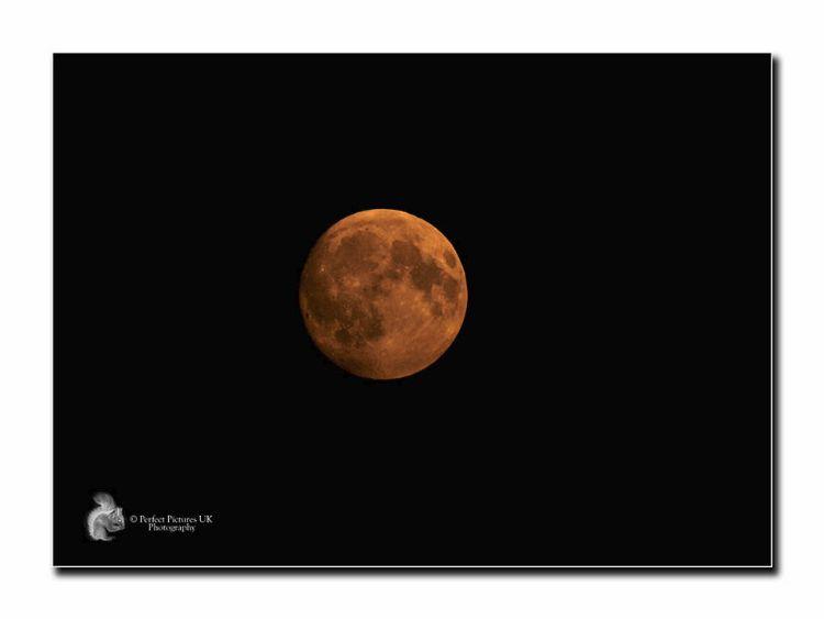 Harvest Moon 3685