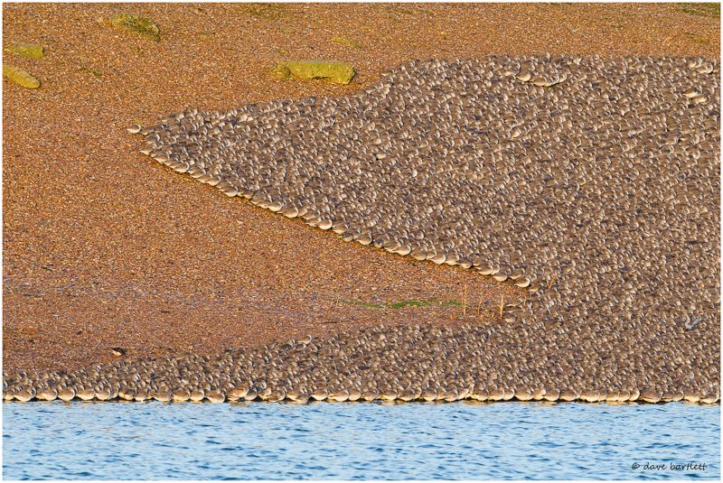 Knot flock at rest