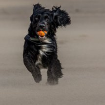 Colly On Barry Beach in Sand Storm