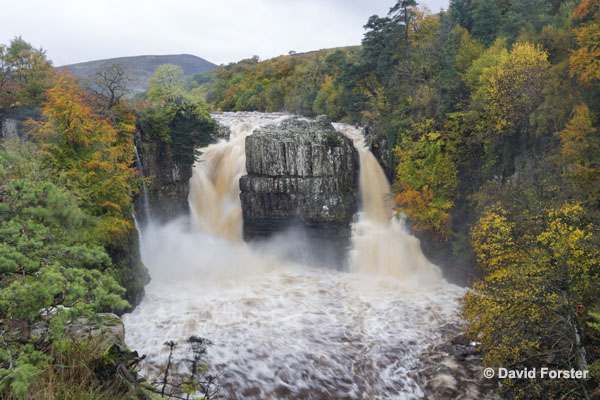 01M-5541 Autumn Trees with High Force in Flood Conditions Teesdale County Durham UK