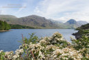 02M-2185 Hawthorn Flowers and the View Across Wastwater Towards Middle Fell and Yewbarrow Lake District Cumbria