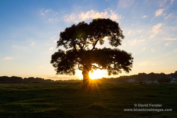 02M-3124 Solstice Sunrise 2014 Silverdale, Lancashire