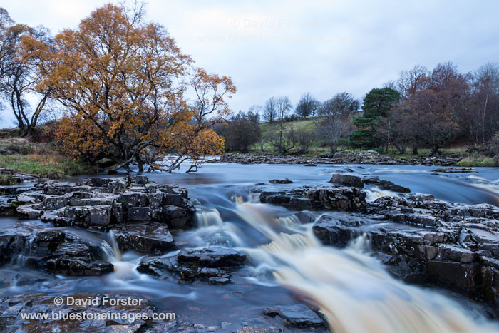 03M-0152 Autumn Tree on the River Tees at Night, Low Force Bowlees Teesdale County Durham UK