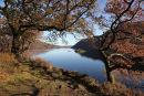 04D-0352 Autumn Oak Trees and Norfolk Island on Ullswater Lake District Cumbria UK.