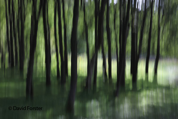 05D-4686 Woodland Trees Abstract.
