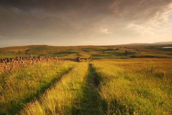 06-6360 Mickleton Moor and Hay Meadow with Track in Evening Light from Brownberry Plantation, Teesdale County Durham. Taken as Bad Weather Begins to Clear
