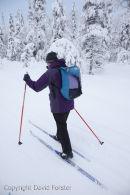 06D-0999 Cross Country Skier Pallas-Yllastunturi National Park Near Yllas in Finnish Lapland Finland