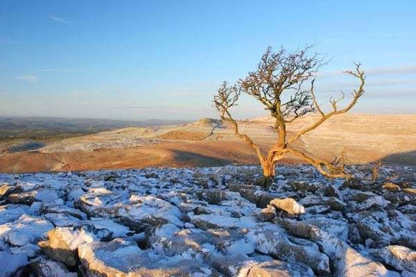 07-0843 Dawn Winter Light and Tree on a Karst Landscape, Scales Moor, Yorkshire Dales