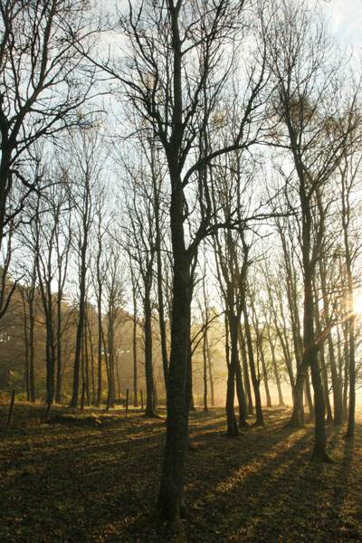 07-3741 Autumn Light and Mist in Birch Woodland Teesdale County Durham