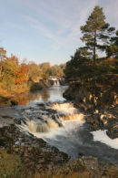 07-3783 Low Force Waterfall in Autumn River Tees Teesdale County Durham