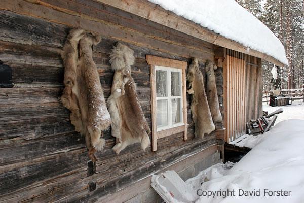 07-5017 Raindeer Skins Hanging on House in Northern Finland