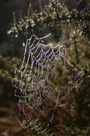 1.1 Dew Coated Spiders Web.