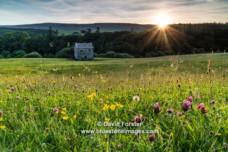 2018-M3-2017 North Pennine Wild Flower Meadow, Holwick, Teesdale, County Durham UK