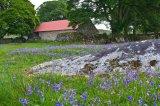 Emsworthy barn3