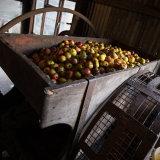 Indicknowle Cider Farm, Devon