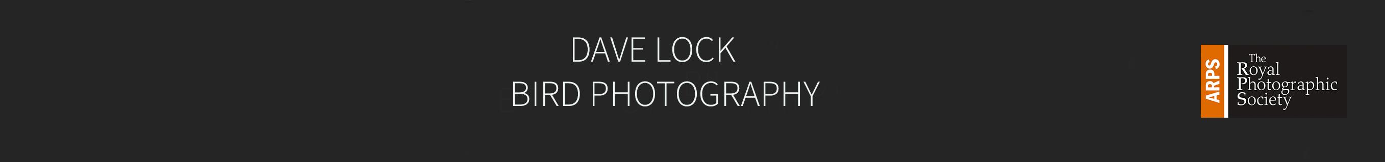 <em>DAVE LOCK      Bird Photography