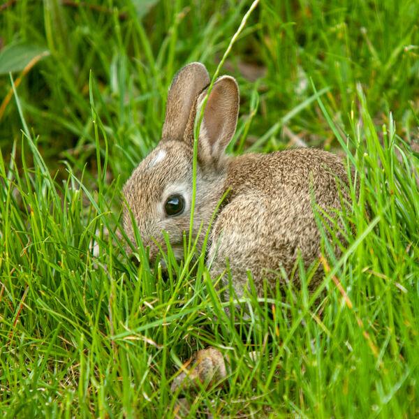 Baby Bunny.