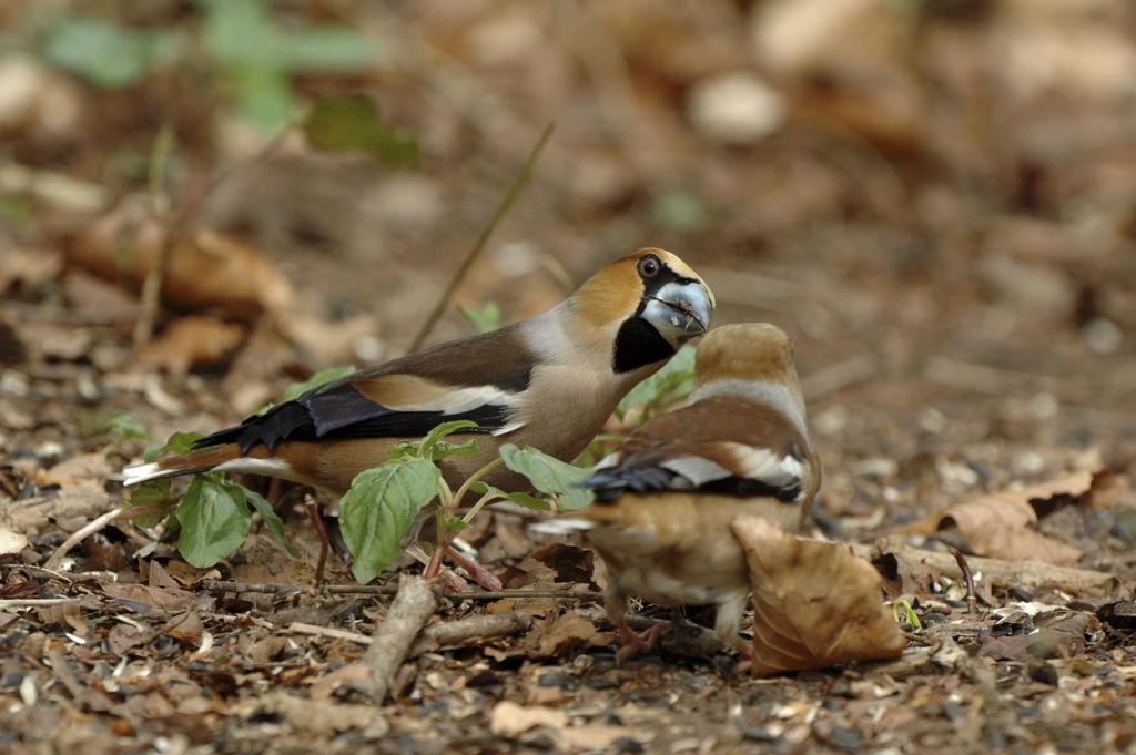 Male feeding female.