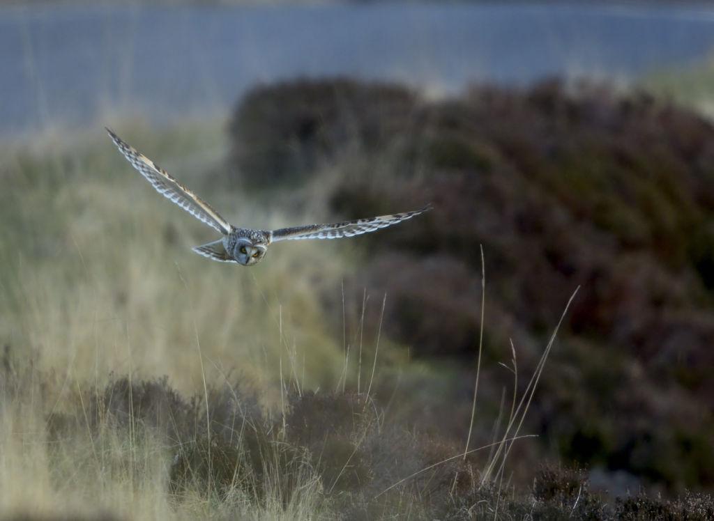 S E Owl