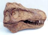 T rex skull