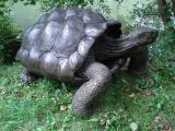 Bronze galapagos tortoise