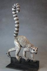 RIng-tailed lemur 2015