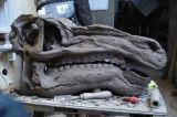 Iguanadon skull