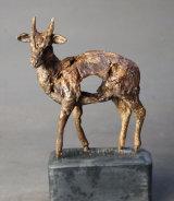Muntjac Deer 2016