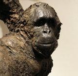 Orangutan - Wildlife Artist of the year runner up 2017