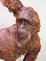 Orangutan 2017 close up