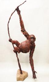 Orangutan 2017