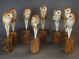 These owls have heads that you can turn