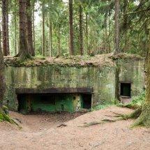 WW2-Bunker-Strauch 6501