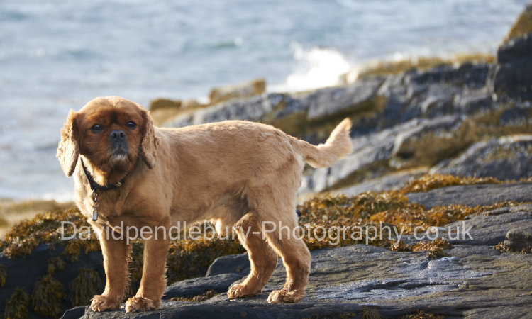 Jasper On The Beach The Isle Of Raasay