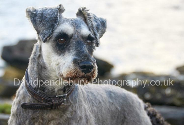 Spike On The Beach