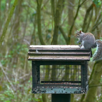 Squirrel Moore Nature Reserve