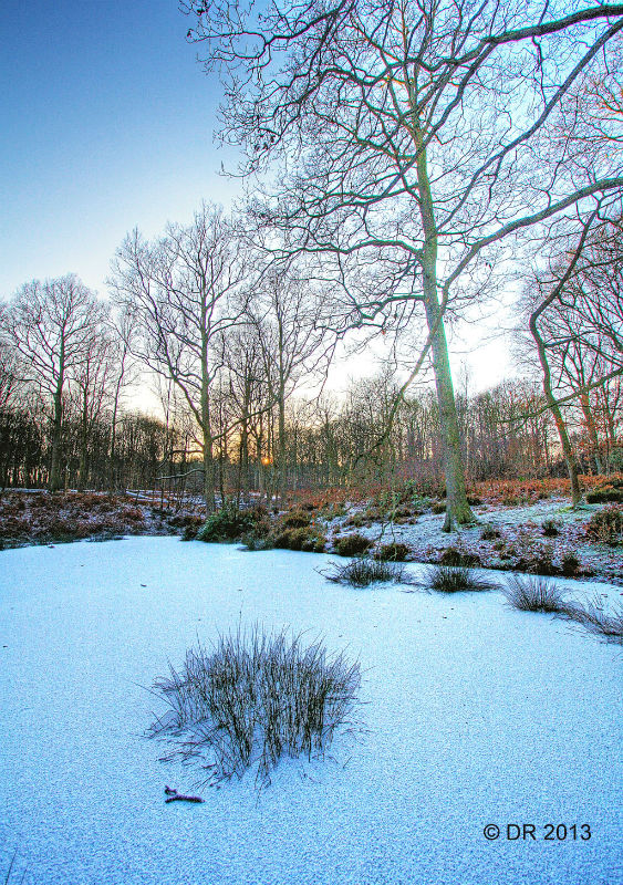 (1) HDR images of the Wyre Forest