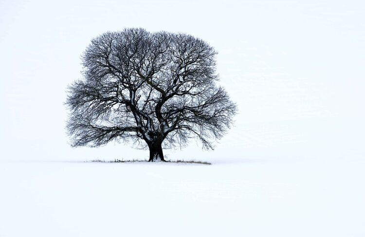 Winter tree in Wiltshire