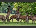 A Deer Disagreement