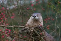 Elevated Otter!