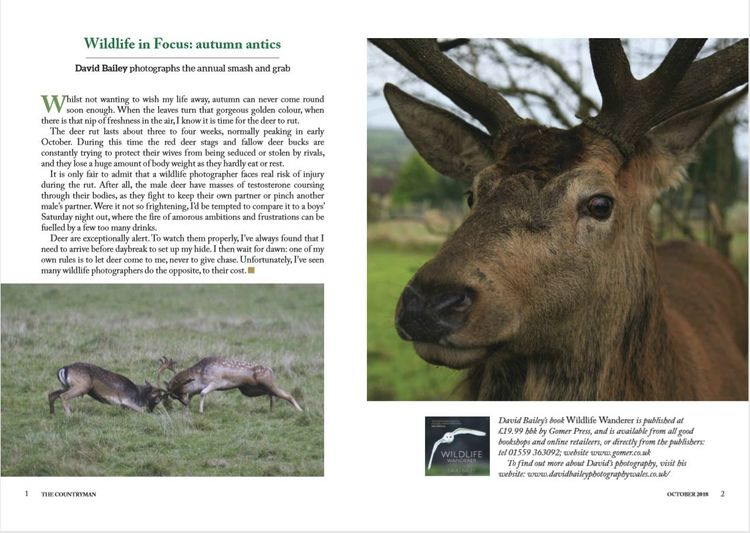 Countryman deer feature