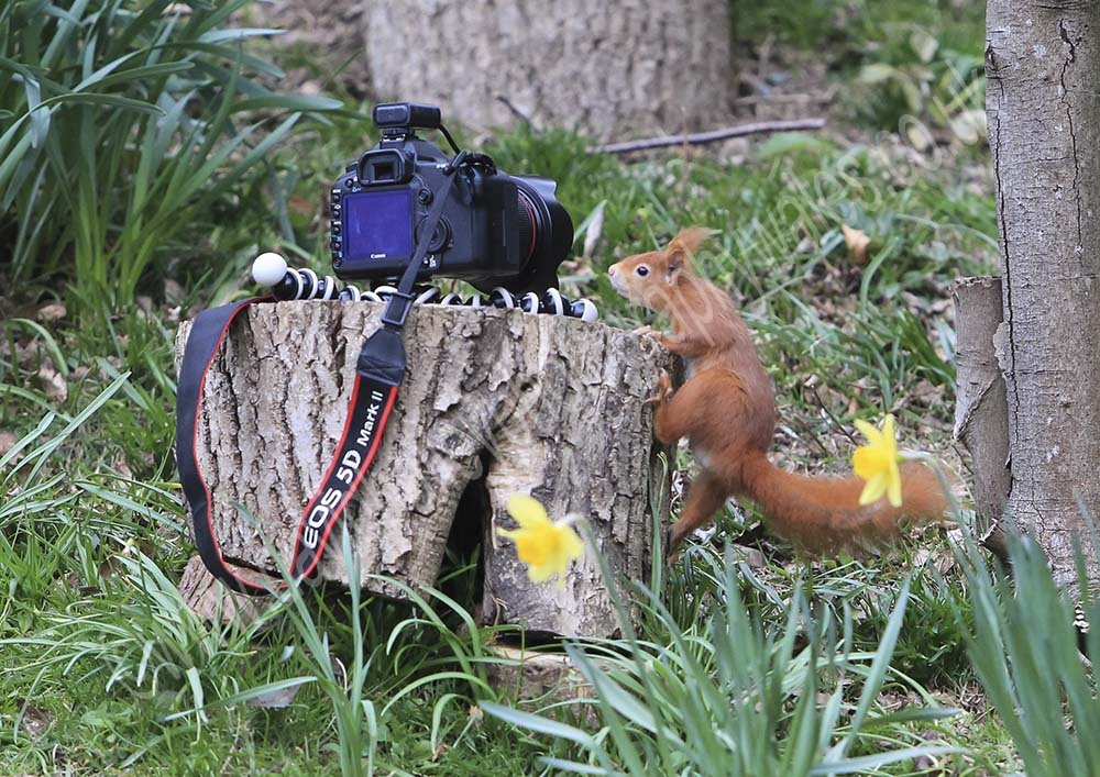 Canon not Nikon