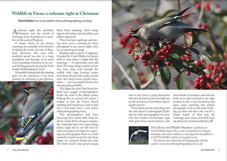 Countryman Magazine Waxwing feature