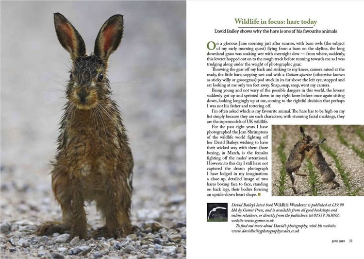 Countryman Magazine Hare feature