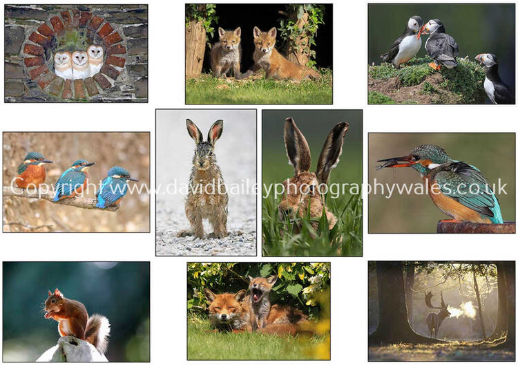 A pack of ten of my best selling greeting cards as seen in the image, £30.00 inc P&P. Click on this thumbnail to order.