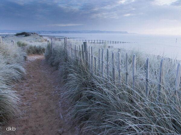 Frozen dunes Dawlish Warren