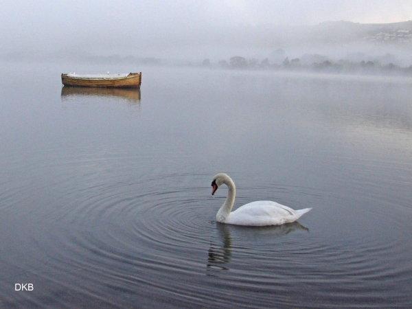 Foggy dawn Combeinteignhead, Teign Estuary